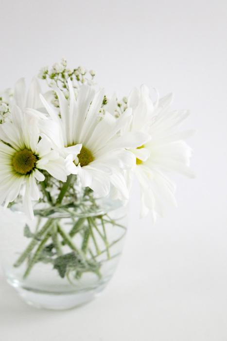 daisy, diasies, flowers, vase